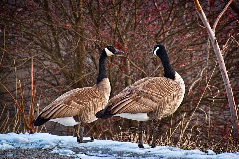 Pair in Winter
