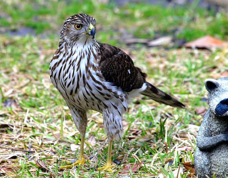 Where Did Those Darn Sparrows Go?