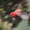 Apanane in Flight