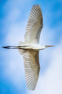 Wing Symmetry
