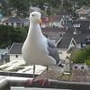 Seaside Seagull