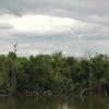Oklawaha River, Central Florida