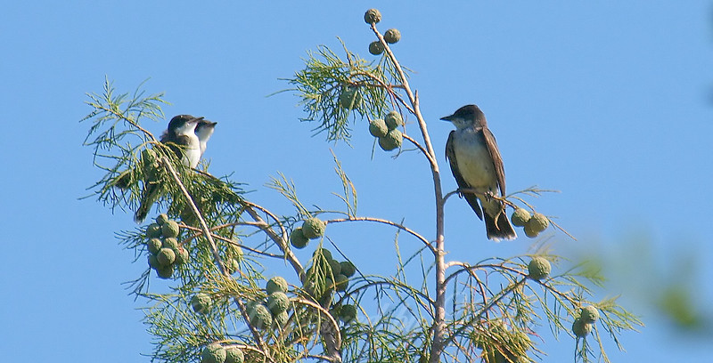 Parent & Fledglings Stare At Each Other