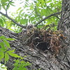 One Youngster Is Still In The Nest