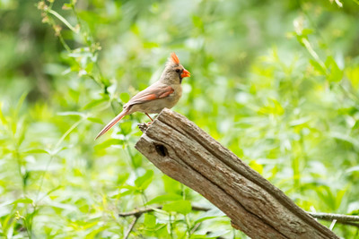 Birds & Chipmunks