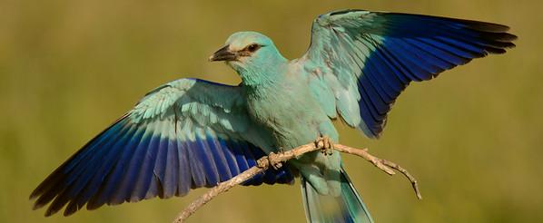 Asya Ivanova Wildlife Photography