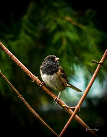 Framed perch