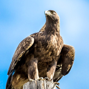 Golden Eagle Ready for Liftoff