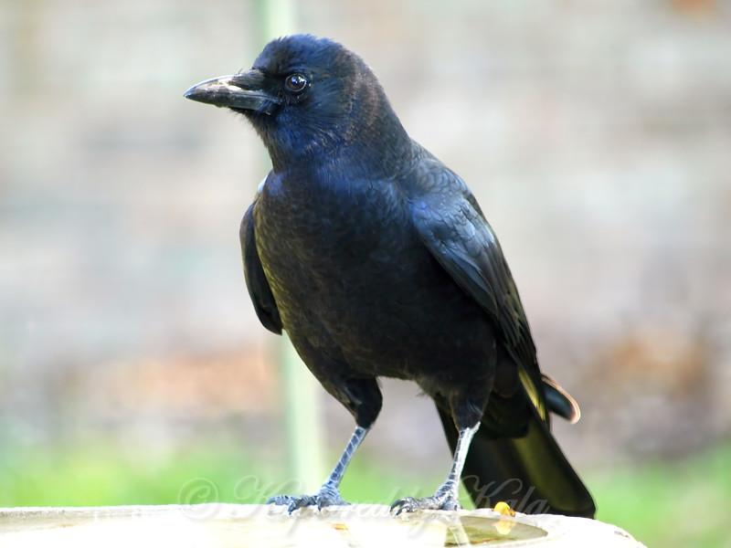 Ol Hairy Beak