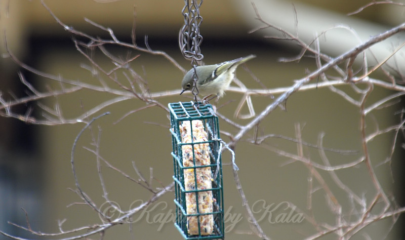 Inspecting the Top of the Suet