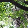 Big Cooper's Nest