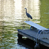 Heron, LO   © Alan Mela