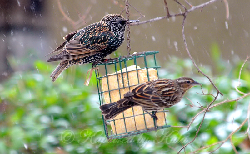 Sharing The Suet During A Snowstorm