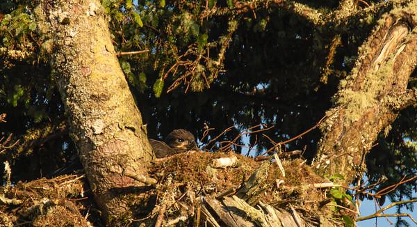 Nestled in Nest