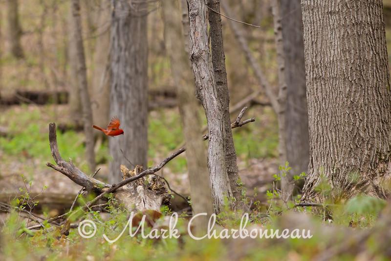 Landing Cardinal