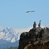 Cormorants and Gull on Gull Island, Kachemak Bay, Alaska