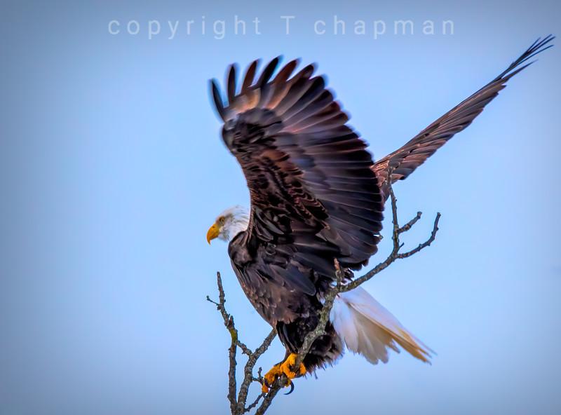 Eagle at Fermi
