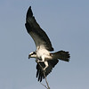 Birds #9