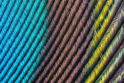Peacock feather macro