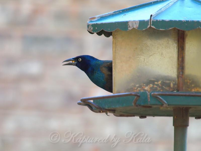 My Colors Match The Birdfeeder