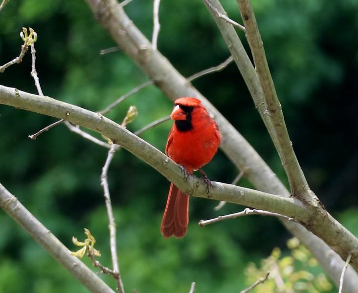 May 2020 Cardinal
