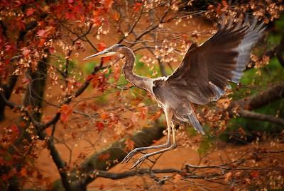 Heron Jump