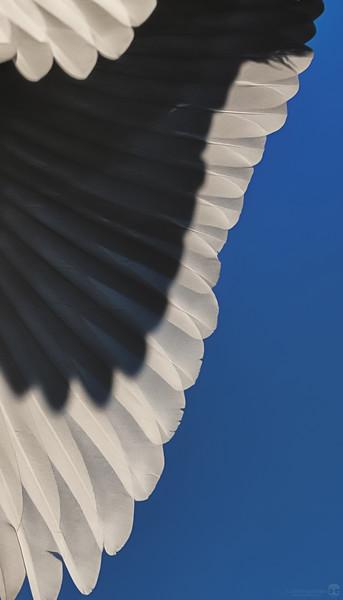 Feathered Fringe