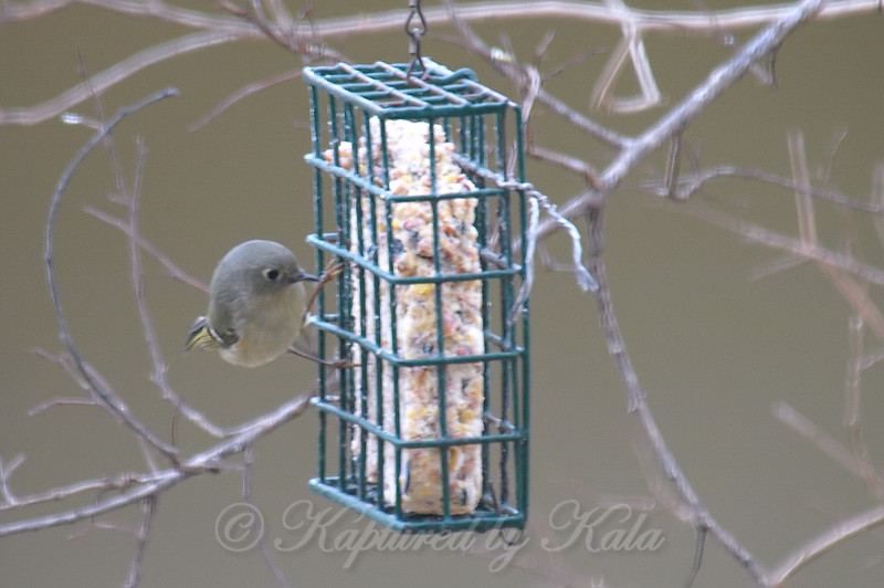 Inspecting the Side of the Suet