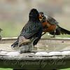I Said Get Out Of My Birdbath!