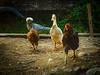 Farm Thugs