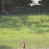 Little Fox, Big Dreams