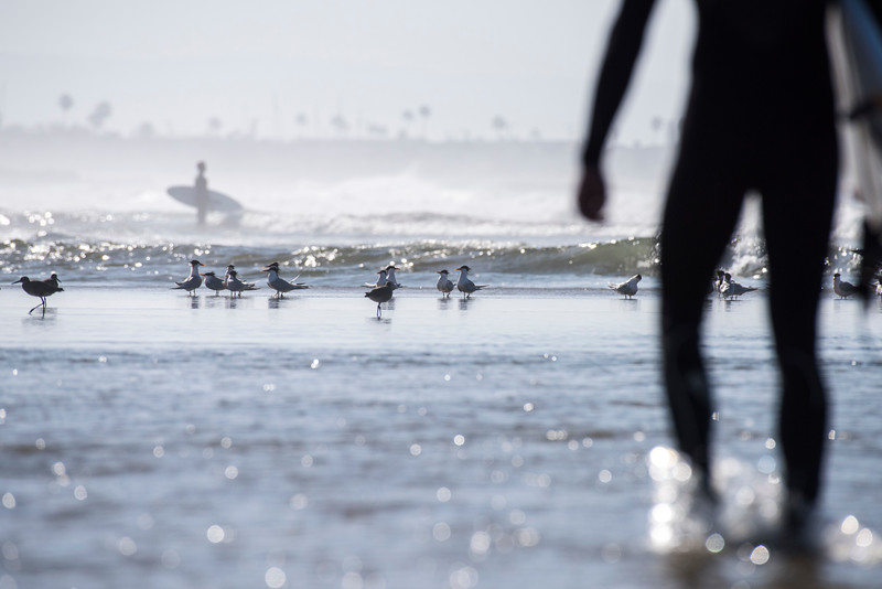 Surf and Birds II