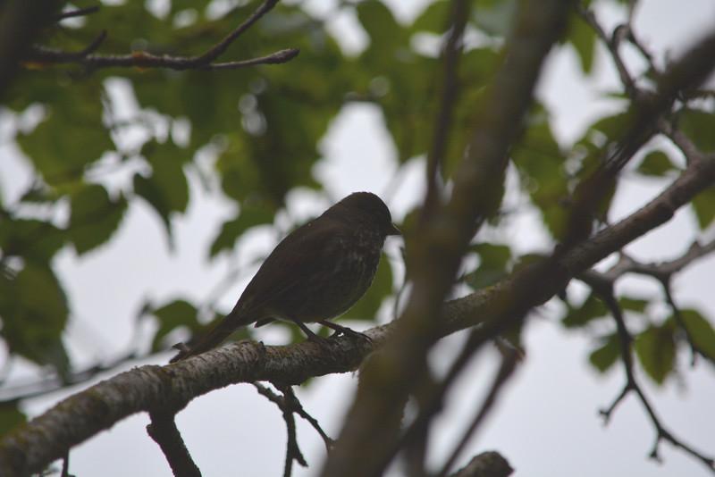 Hummingbird on Monhegan Island