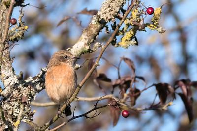 Little Bird Freemans Marsh Hungerford 2