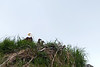 American Eagle with Eaglets