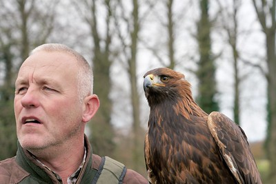 Elvis  the Golden Eagle, looking with Dave 2