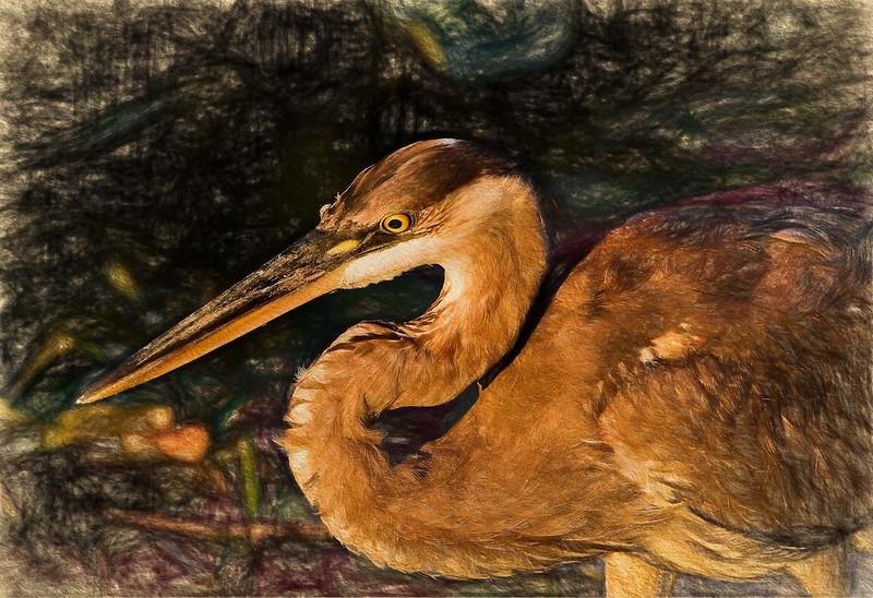 Great Blue Heron III Art