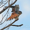 Kestrel Yoga Position 4