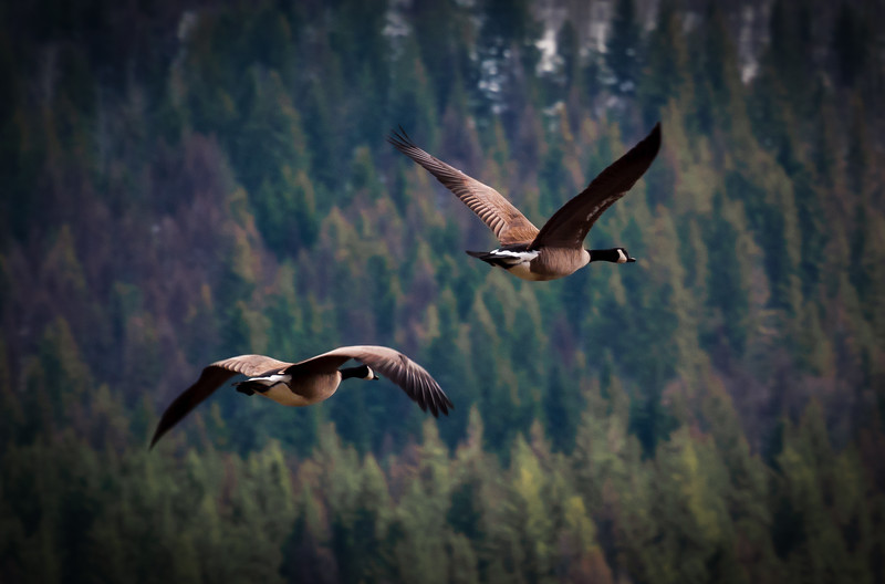 Duet in Flight