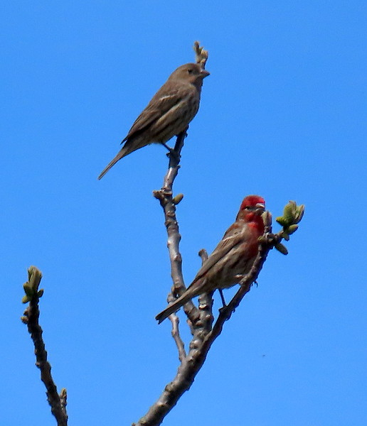 The Finches, Mr & Mrs