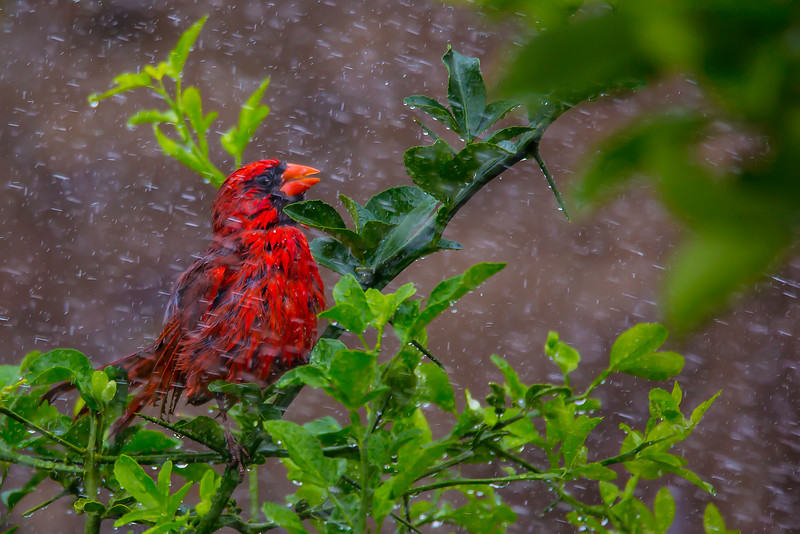 Backyard bird shower.