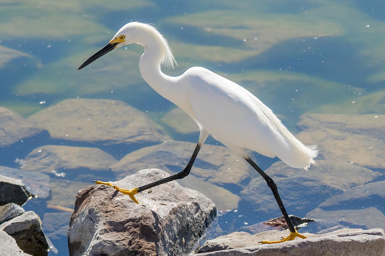 IMAGE: https://photos.smugmug.com/Birds/i-J2qFmkn/0/fb0d89df/X2/122A1800-SharpenAI-motion-X2.jpg