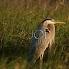 Bird Pics 044