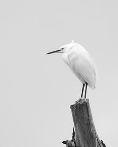 The Egret Perch