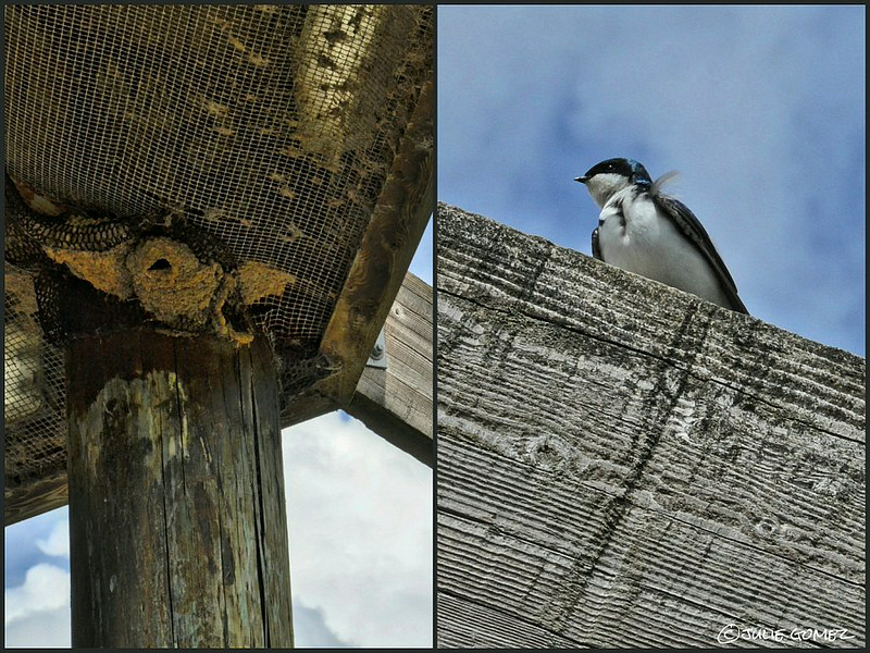 Empty Nests and Tree Swallows