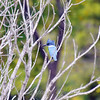 Hide And Seek With A Kingfisher