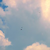 21 Last View Of 2 Kites & A Red-Tail
