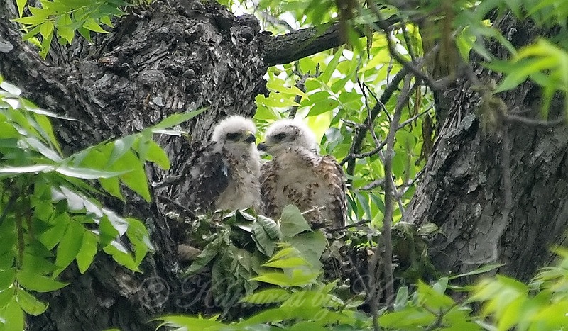 Raptor Siblings View 2