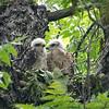 Raptor Siblings View 2
