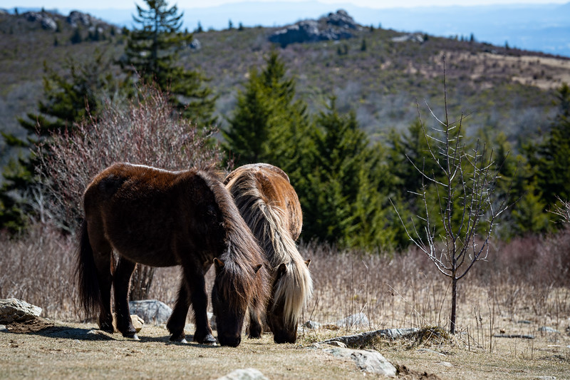 Taken at Grayson Highlands State Park, Mouth of Wilson, VA on 22/3/2021